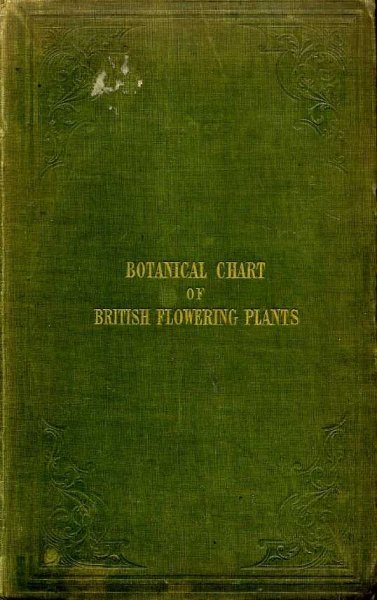 Image for THE BOTANICAL CHART OF BRITISH FLOWERING PLANTS AND FERNS: shewing at one view their chief characteristics.......