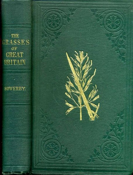 Image for THE GRASSES OF GREAT BRITAIN
