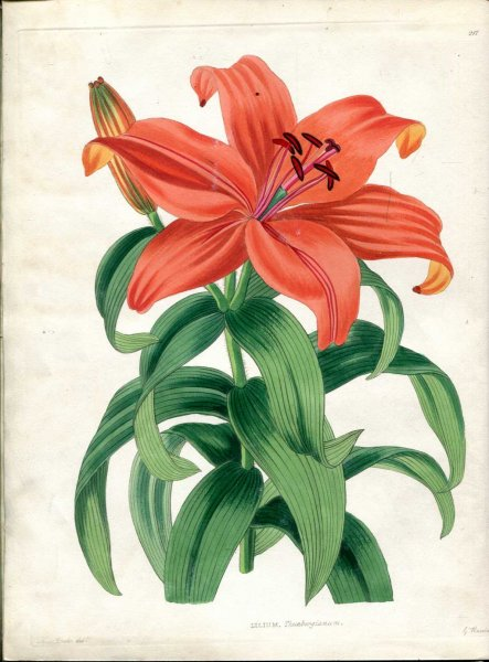 Image for THE FLORAL KEEPSAKE a selection of forty-eight accurately coloured figures of tender and hardy useful and ornamental plants