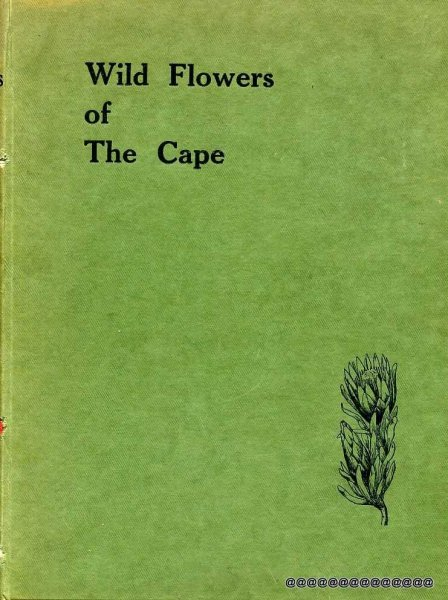 Image for WILD FLOWERS OF THE CAPE A Floral Year