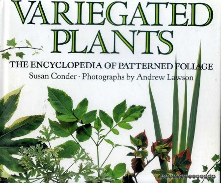 Image for VARIEGATED PLANTS The Encyclopedia of Patterned Foliage