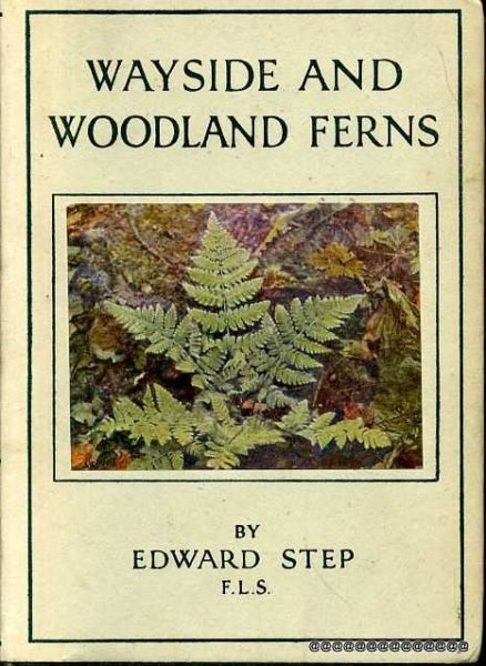 Image for Wayside and Woodland Ferns : A Guide to the British Ferns, Horsetails and Club-Mosses