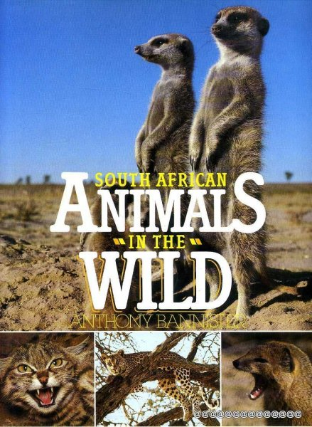 Image for SOUTH AFRICAN ANIMALS IN THE WILD
