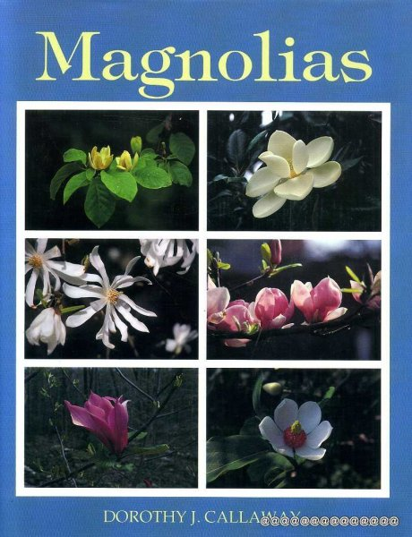 Image for MAGNOLIAS