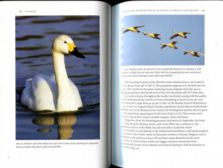 Image for WILDFOWL (New Naturalist Library No 110) Signed leather bound limited edition