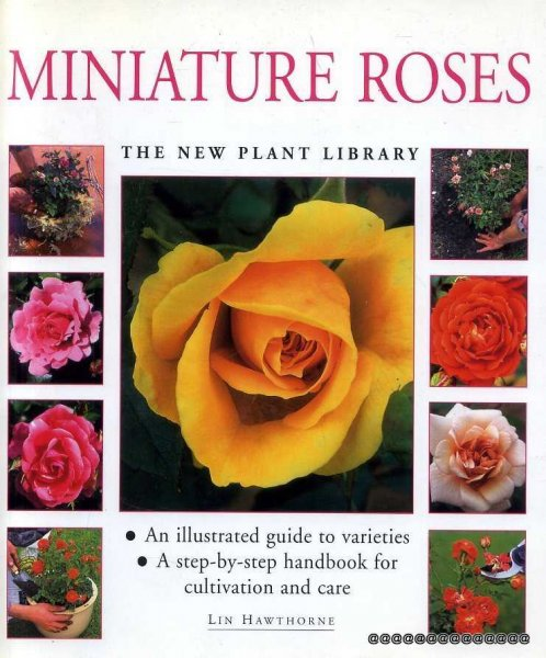 Image for Miniature Roses