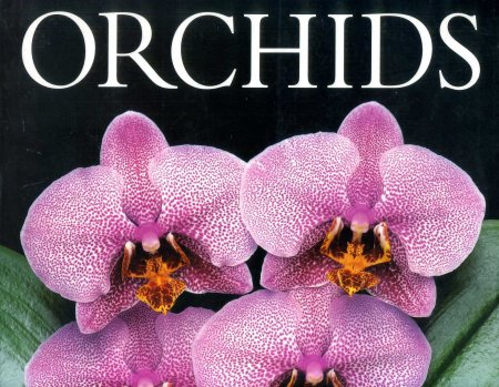 Image for Orchids