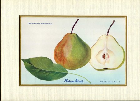 Image for Fine Coloured Print of Pears 'Sterkmanns Butterbirne' from Nach der Arbeit