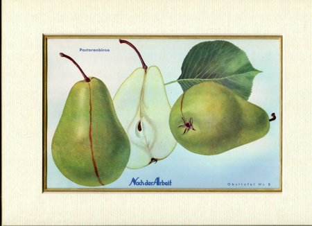 Image for Fine Coloured Print of Pears 'Pastorenbirne' from Nach der Arbeit