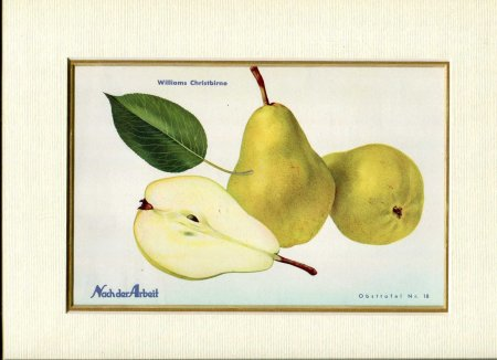 Image for Fine Coloured Print of Pears 'Williams Christbirne' from Nach der Arbeit