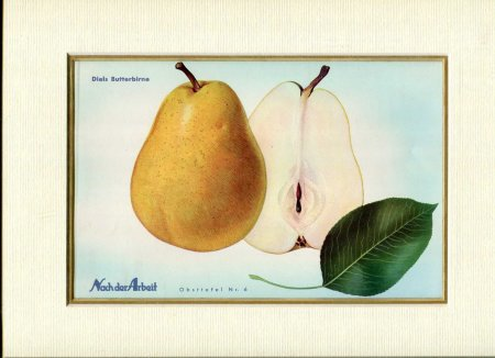 Image for Fine Coloured Print of Pears 'Diels Butterbirne' from Nach der Arbeit