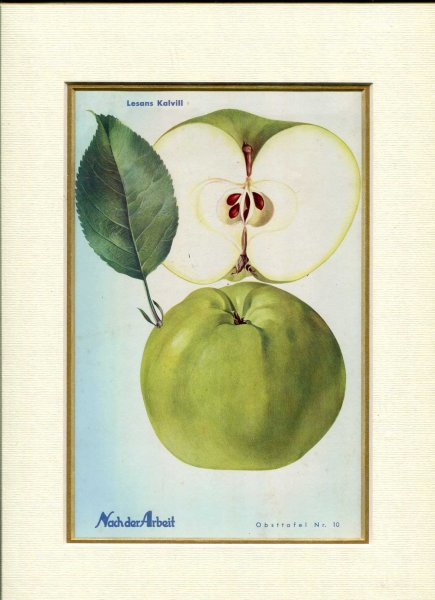 Image for Fine Coloured Print of an Apple 'Lesans Kalvill' from Nach der Arbeit