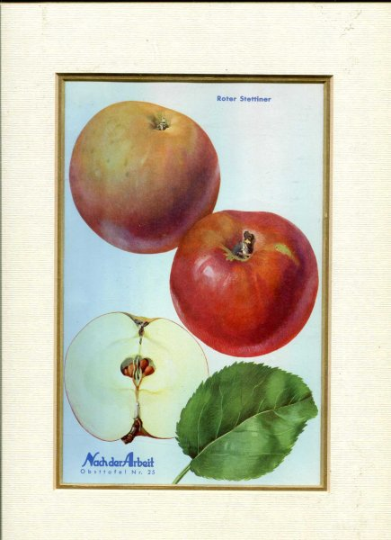 Image for Fine Coloured Print of an Apple 'Roter Stettinerl' from Nach der Arbeit