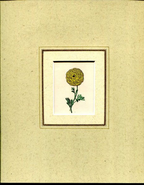Image for Mounted hand coloured print 'Untitled' from 'The Botanic Garden'