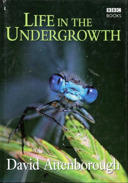 Image for Life in the Undergrowth