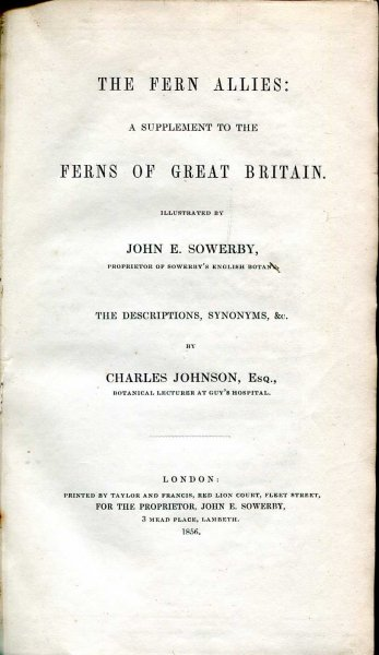 Image for The Fern Allies : A Supplement to the Ferns of Great Britain