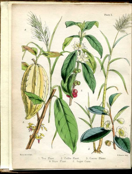 Image for Popular Economic Botany ; or Description of the Botanical and Commercial Characters of the principal articles of vegetable rigin, used for clothing, tanning, dyeing, building, medicine, perfurmery etc