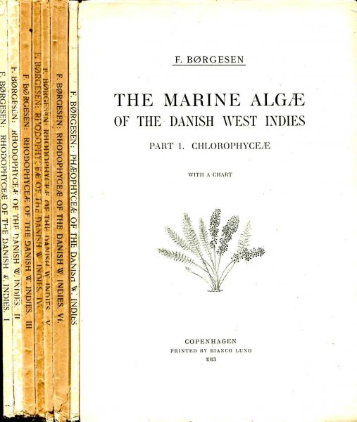 Image for The Marine Algae of the Danish West Indies volume I in two parts : Chlorophyceae & Phaeophyceae & volume 2 in six parts : Rhodophyceae