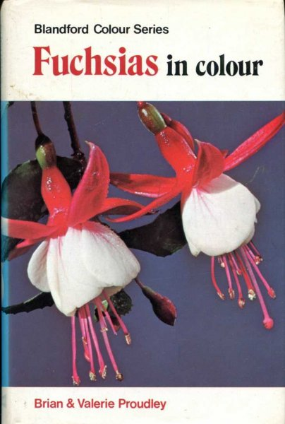 Image for Fuchsias in Colour