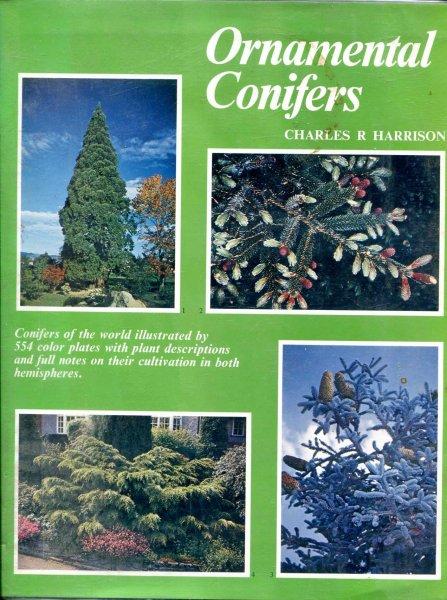 Ornamental Conifers