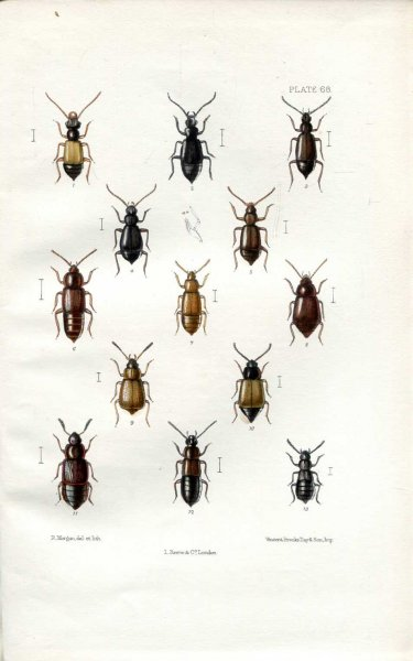 Image for The Coleoptera of the British Islands, a descriptive account of the families, genera, and species indigenous to Great Britain and Ireland, Part XVIII