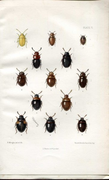 Image for The Coleoptera of the British Islands, a descriptive account of the families, genera, and species indigenous to Great Britain and Ireland, Part XXI