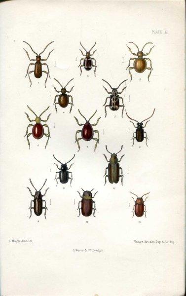 Image for The Coleoptera of the British Islands, a descriptive account of the families, genera, and species indigenous to Great Britain and Ireland, Part XXXIV