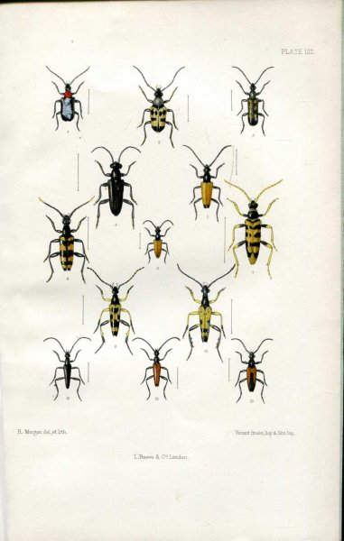 Image for The Coleoptera of the British Islands, a descriptive account of the families, genera, and species indigenous to Great Britain and Ireland, Part XXXV