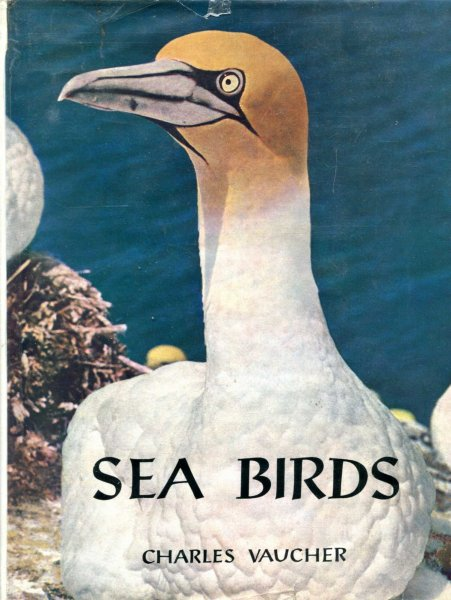Image for Sea Birds