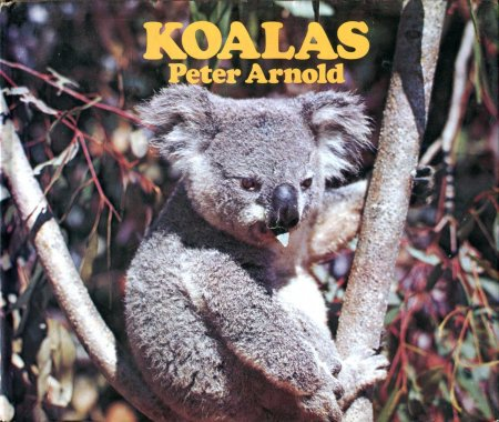 Image for Koalas