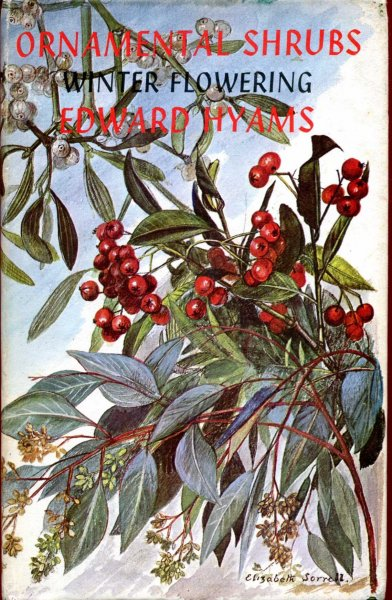Image for Ornamental Shrubs for Temperate Zone Gardens : Winter - Coloured foliage and berry d