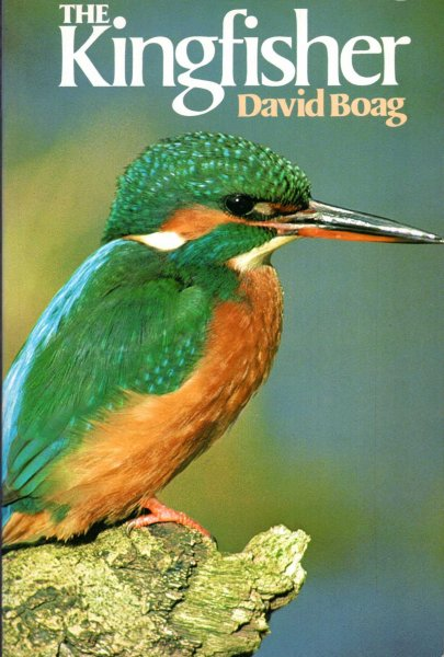 Image for The Kingfisher
