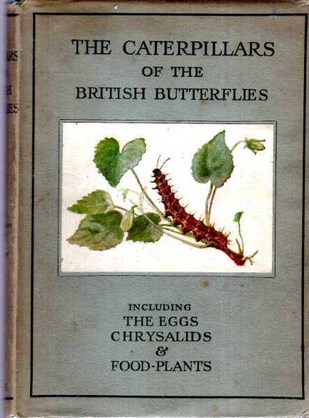 Image for The Caterpillars of the British Butterflies including their eggs, chrysalids and food-plants