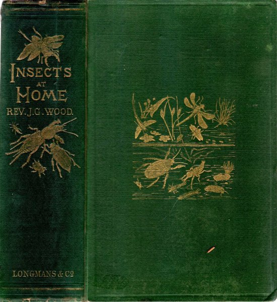 Image for Insects at Home, being a popular account of British Insects, their structure, habits, and transformations