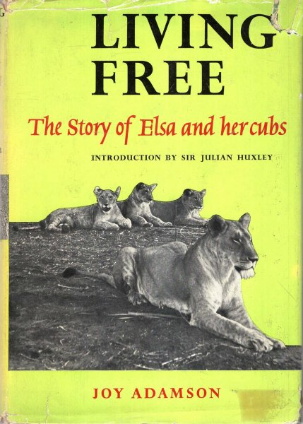 Image for Living Free, the story of Elsa and her Cubs