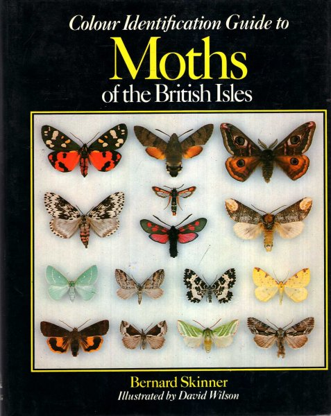 Image for Colour Identification Guide to Moths British Isles