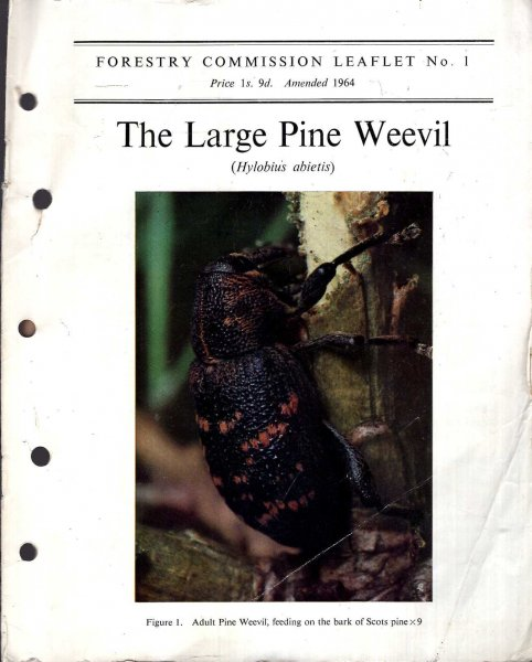 Image for Forestry Commission Leaflet No 1 : The Large Pine Weevil (Hylobius abietis)