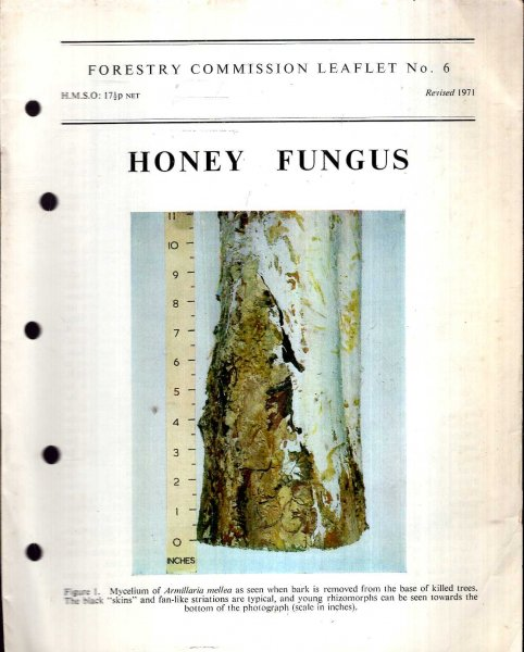 Image for Forestry Commission Leaflet No 6 : Honey Fungus