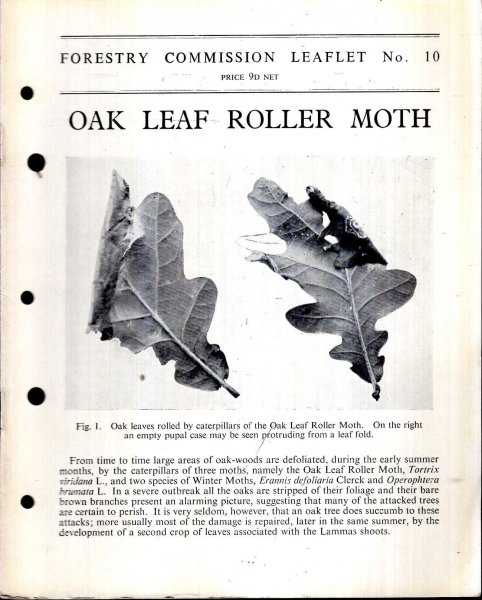 Image for Forestry Commission Leaflet No 10 : Oak Leaf Roller Moth