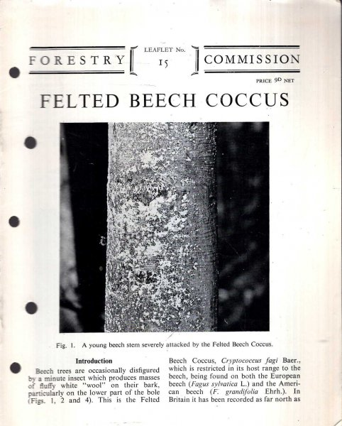 Image for Forestry Commission Leaflet No 15 : Felted Beech Coccus