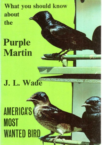 Image for What You Should Know About the Purple Martin, America's Most Wanted Bird