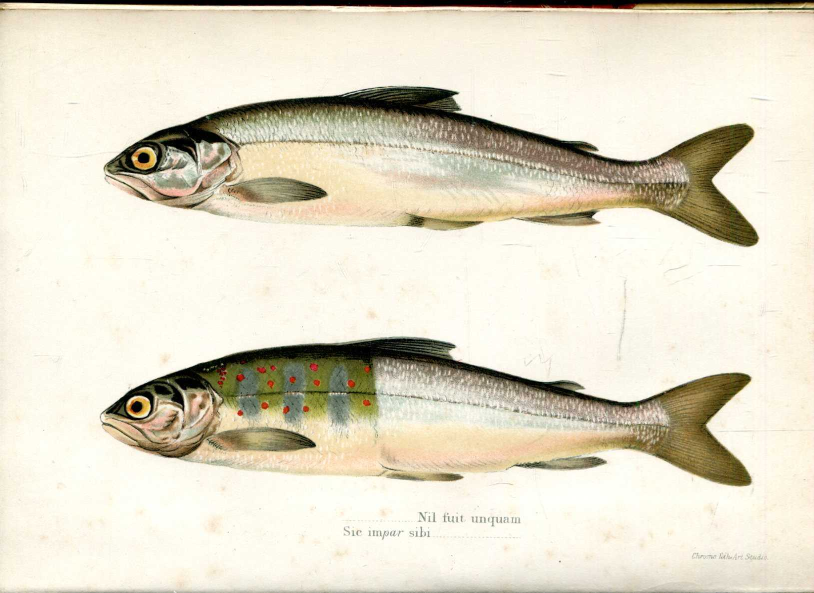 Image for The Sportsman's Library : Days and Nights on Salmon Fishing in the Tweed
