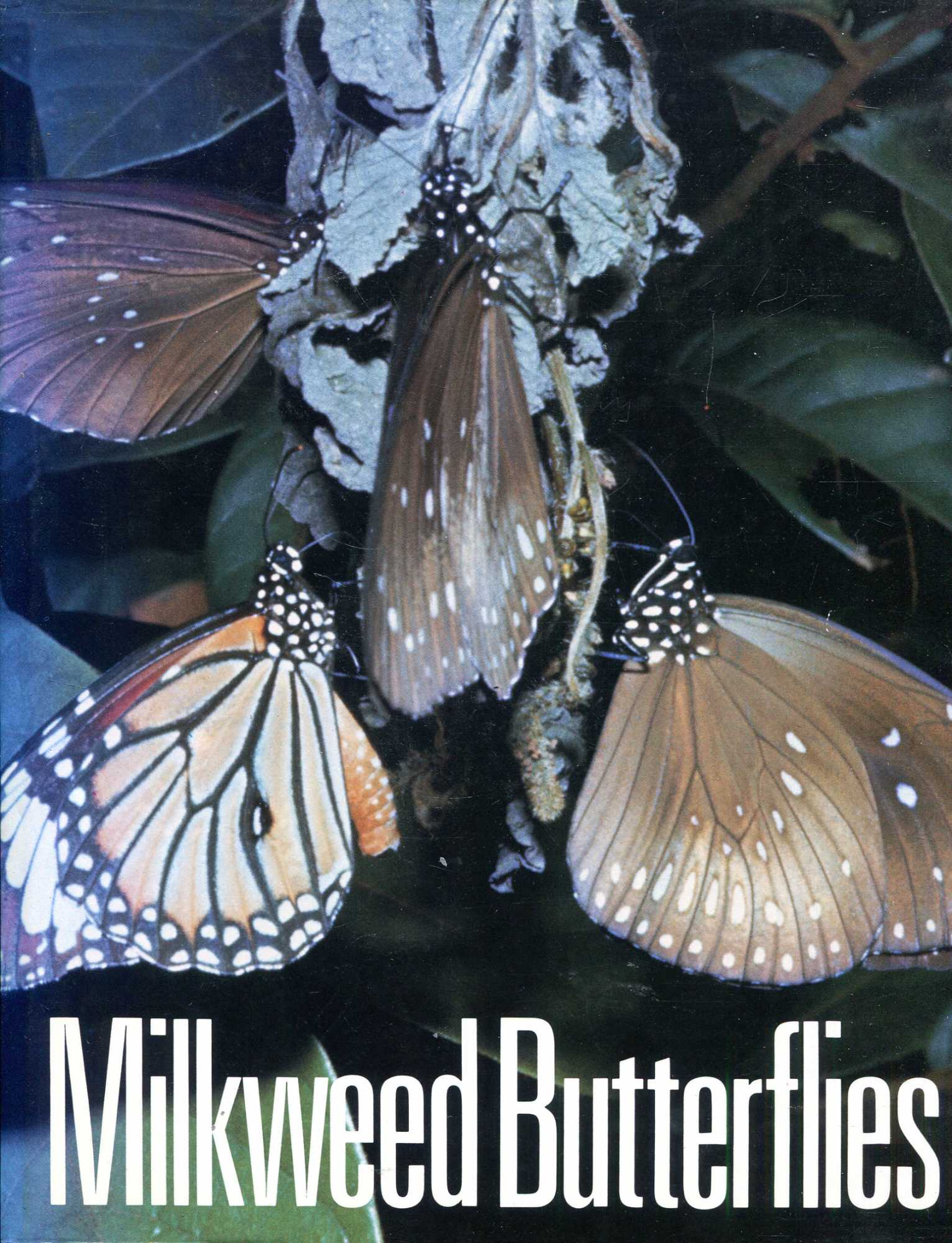 Image for Milkweed butterflies, their cladistics and biology: Being an account of the natural history of the Danainae, a subfamily of the Lepidoptera, Nymphalidae